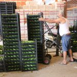 alanyadan polonyaya ilk kez avokado ihracati basladi adc