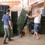alanyadan polonyaya ilk kez avokado ihracati basladi bfa